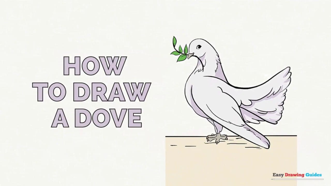 How To Draw A Dove In A Few Easy Steps Easy Drawing Guides