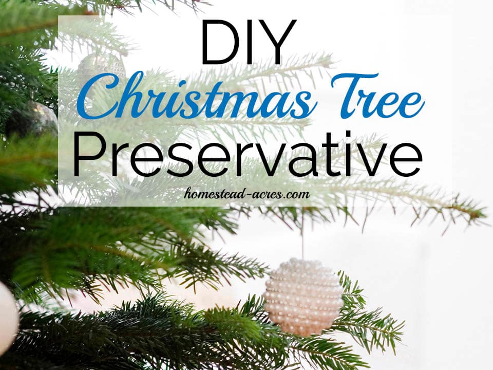 How To Make Your Own Christmas Tree Preservative Safe & Non Toxic -  Homestead Acres - How To Make Your Own Christmas Tree Preservative Safe & Non Toxic