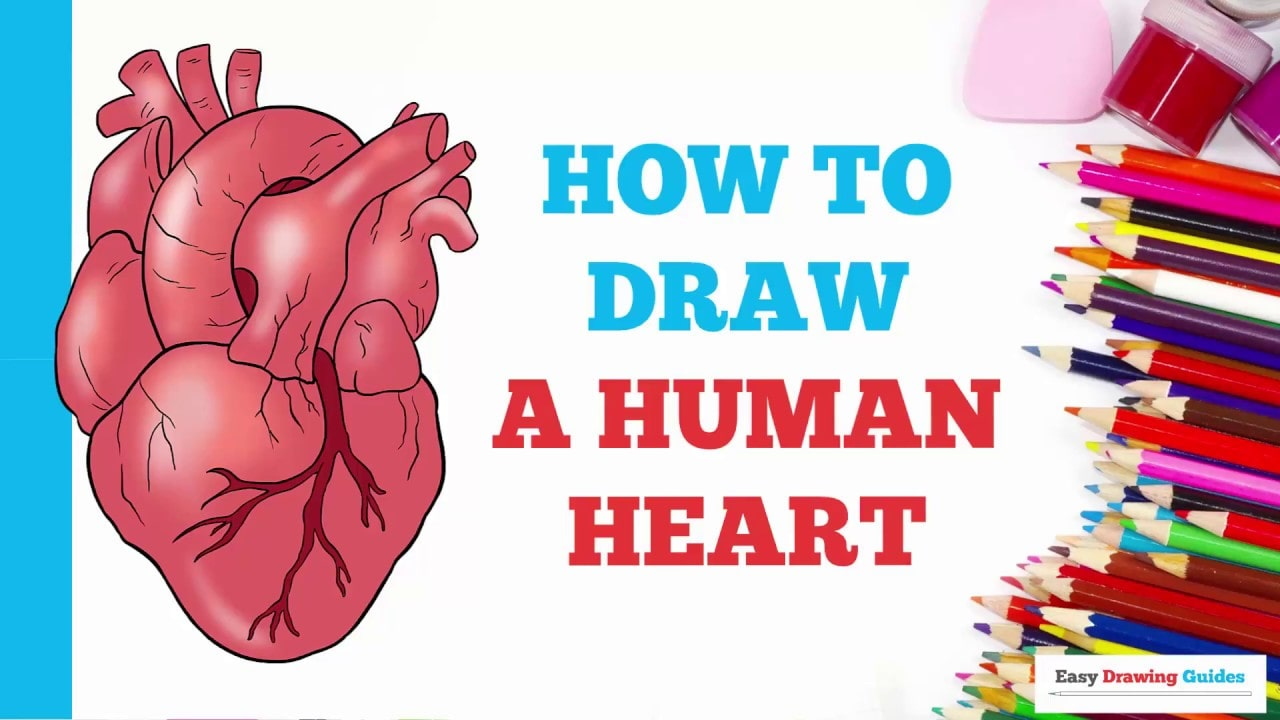 How To Draw A Human Heart Really Easy Drawing