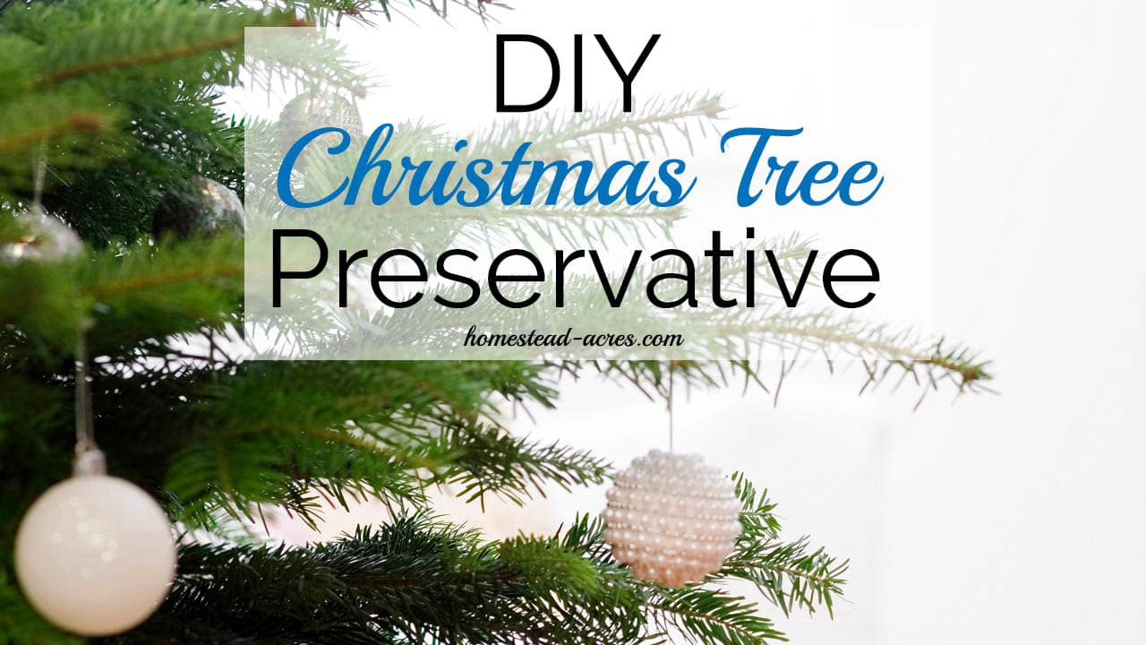 How To Make Your Own Christmas Tree Preservative Safe & Non Toxic ...