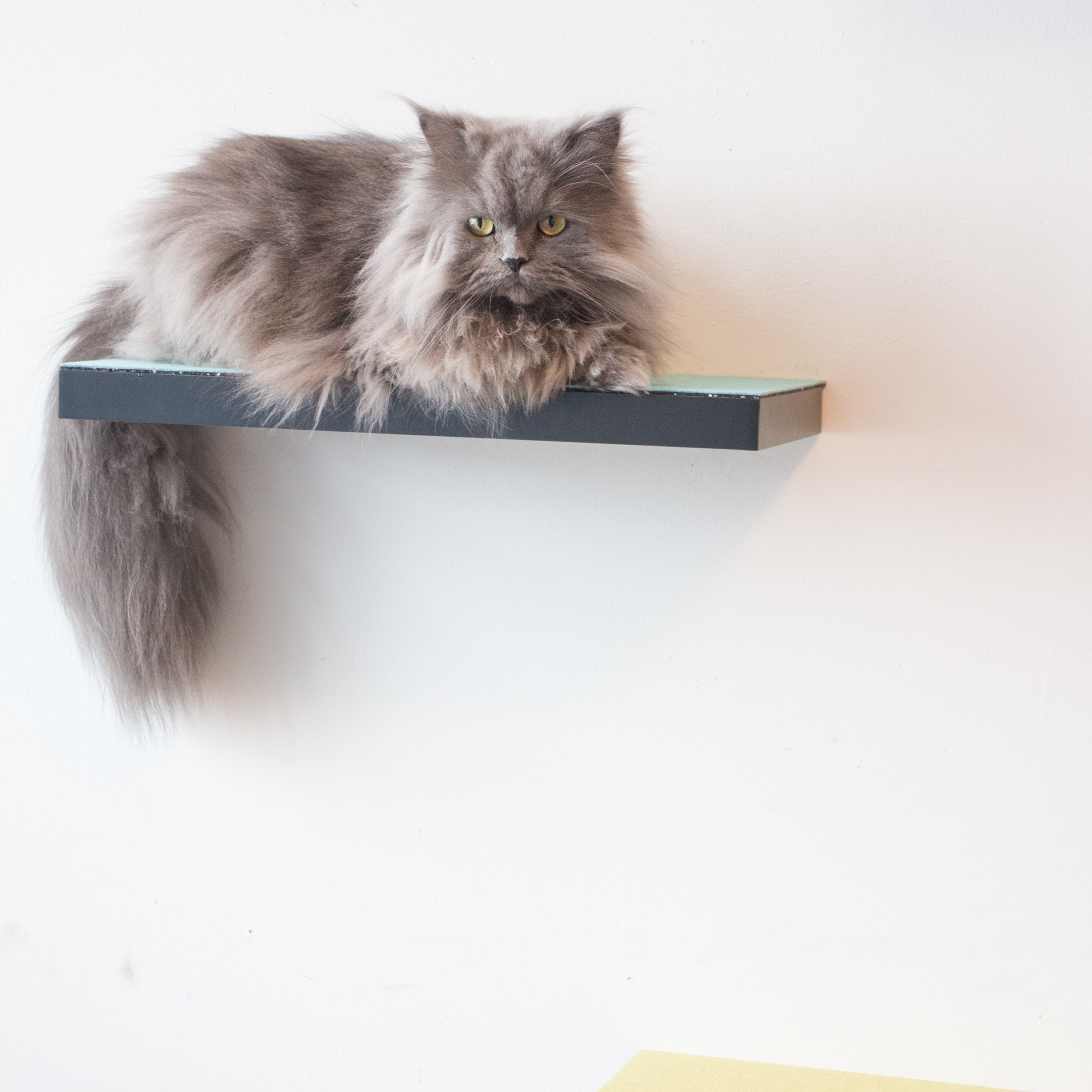 How To Build Cat Shelves That Your Cat Will Love Brooklyn Farm Girl